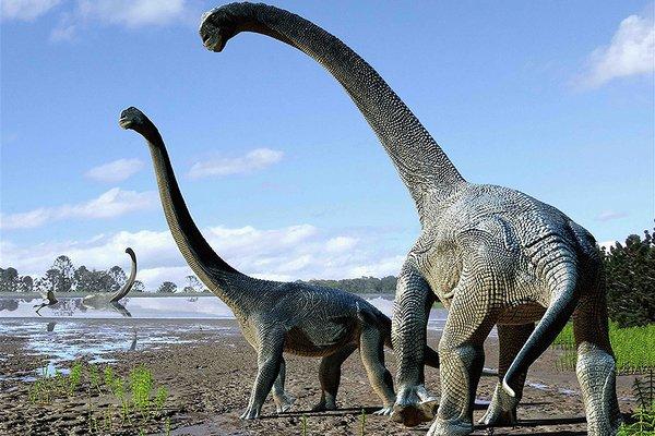 美图趣事:澳洲最不可怕的动物要数恐龙了